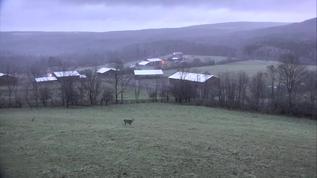Good morning Farm Sanctuary friends