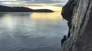Paeson Island  Sea Lions and Cormorants