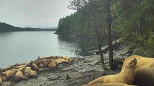 A bunch of napping sea lions
