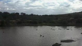 Hippo's gathering