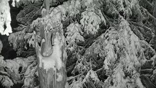 07 54mst  ...looks like a duck carving; then again I blame Winter brain freeze...lol.