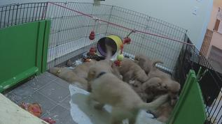Puppy Party!