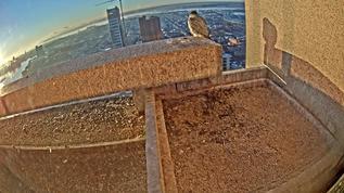 7.49am Surveying the morning.