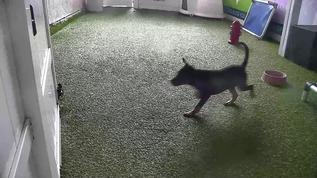 Run and jump!