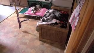 Vance has a bone and other Buckeyes in kitchen are asleep :)