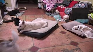 Maddie got the kingsized bed tonight..that's if she stays on it...;-)))