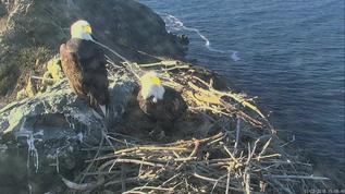 W E Bald Eagles 01-22-18