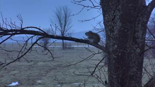 Good morning Mr. Squirrel!!!