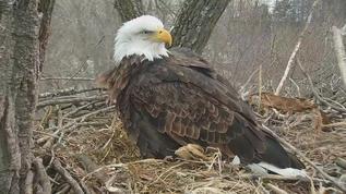 Decorah Bald Eagles 02-22-18