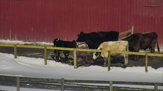 awwww!  the herd is soaking up the sun!