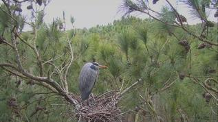 Great nest view this year!