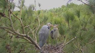 Nesting mom and dad