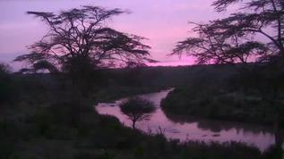 Good Morning Mpala! Such a beautiful pink/purple color!  03/19/18