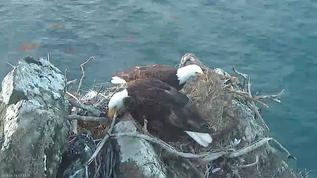 Working on the nest this morning.