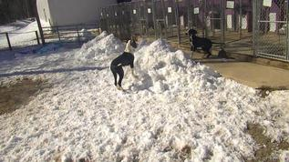 Playing on top of a snow hill
