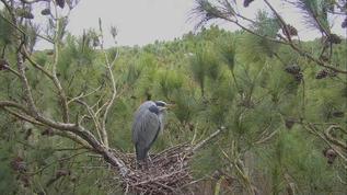wOw wonderful Heron