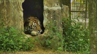 May stay in his den all day