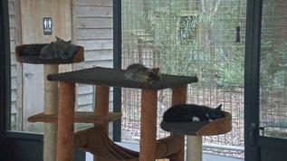 Lots of sleepy kitties