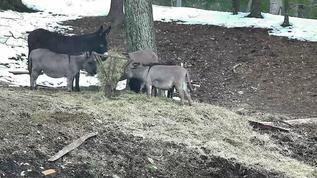 good morning donkey hill!