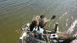 Osprey Nest - C.C. 03-24-18