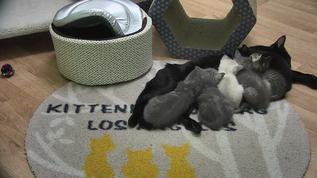 Shhhh kittens and mum sleeping.....