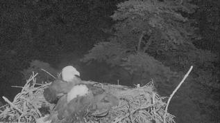 Why are both parents sleeping on the nest?  Isn't that unusual?