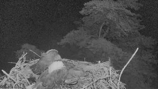 wow, first time i've seen this couple snoozing on the nest ! Protection from the owl perhaps?