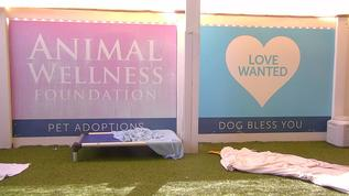 4pm No dogs....good. i guess they are all at the Adoption Event. Hope they all get adopted!