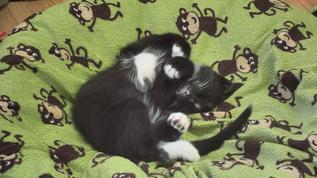 Such cuteness, mwa, mwa, mwa...want to rub the belly