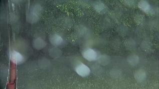 Rain filling up tiger pee lake