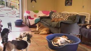 Some snoozing going on...ZZzzz  :)
