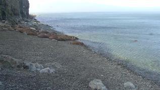 Good Night Round Island!  :3)<