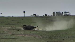 enjoying a roll in the dust