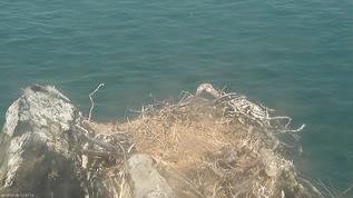 What is in the lower right of the nest? A few days ago Cholyn dropped it in there