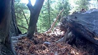 under log