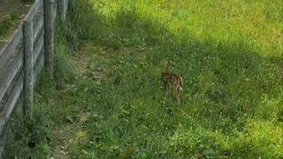 Sweet fawn :-)