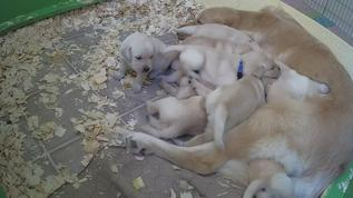Swarm of puppies.  One sweet baby waiting their turn.