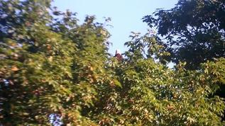 Treetop surveillance...