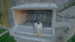 Newman chilling out at the nest box