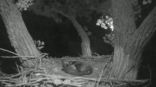 Quiet nest this morning.