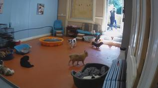 So much fun watching the littles coming and going