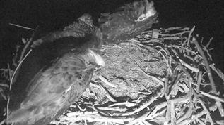 Mom is asleep whilest the girls preen. 1 AM ET (east coast time), July 17, 2018
