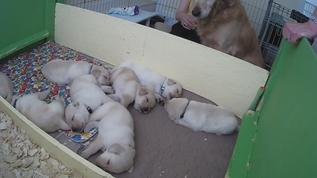Mom watching over her pups!