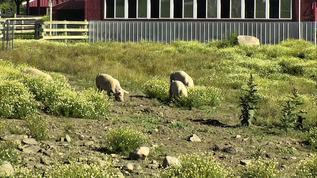 FS/Charlotte's Pasture/Just enjoying their morning snacks!!