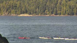 Lotsa Kayakers