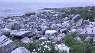 Wow ! That's a lot of puffins !!!