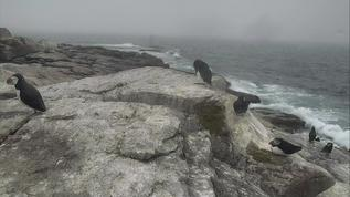 7/22/18 Grey day on Seal Island