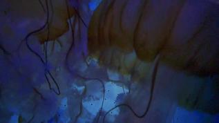 a kaleidoscope of jellyfish