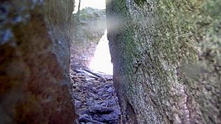Alas, poor Yorick, our Guillemot flew the coop, er, burrow.