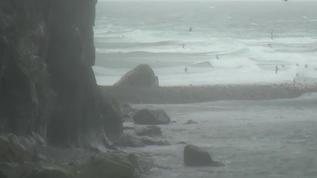 19 53adt  seas are rough & blofers' found a quieter spot...bird chaos....